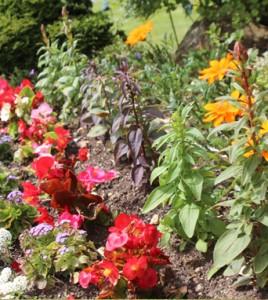 Flower_Beds